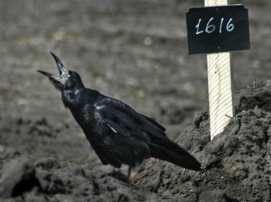 Против строительства крематория в Воронеже высказались 59% жителей